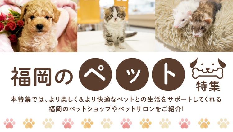 福岡のペット特集